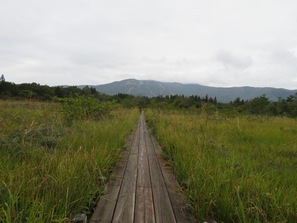ひるがの湿原植物園 湿地