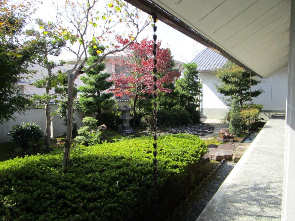 全面ガラス窓越しに見る庭