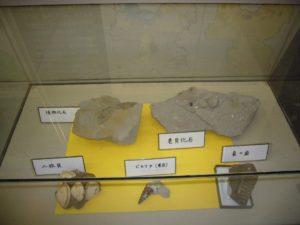 貝、植物、象の歯の化石