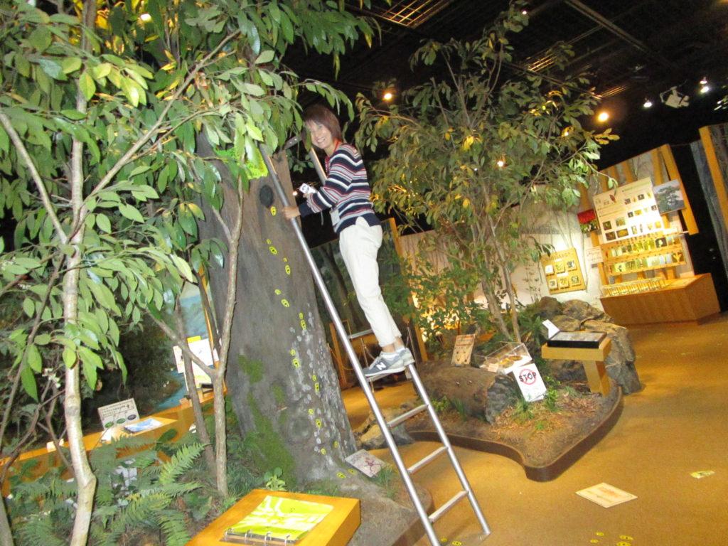 木の上を覗くコーナー