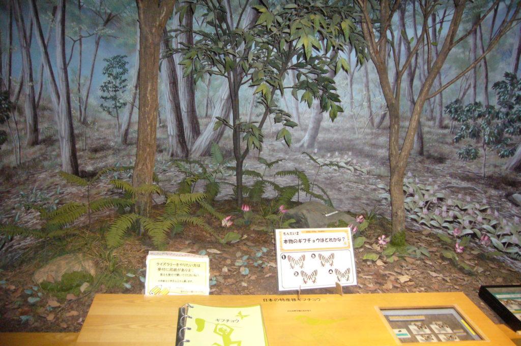ギフチョウの生息地のジオラマ