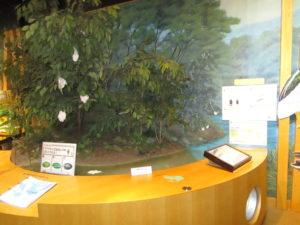 モリアオガエル卵のジオラマ
